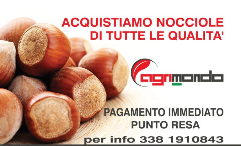 Ritiro e acquisto nocciole Piemonte