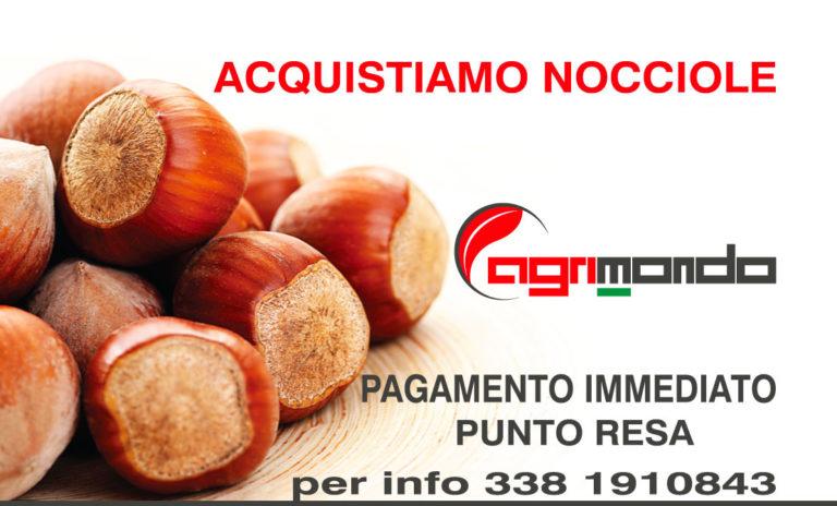 Ritiro nocciole 2018 Agrimondo